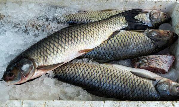قیمت ماهی امروز 20 خرداد