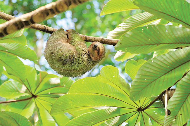 Sloth-Preserve-Arenal-Volcano-National-Park-89d248c358fe