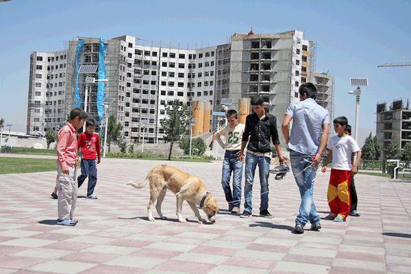 سگگردانی در محل بازی کودکان در بوستانها ممنوع