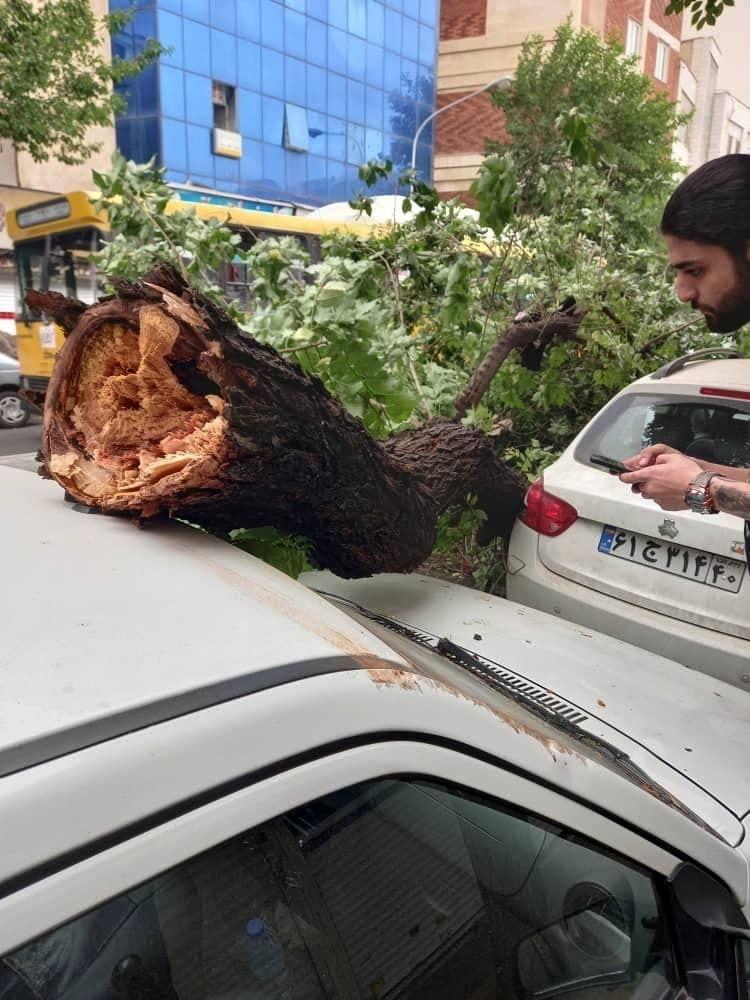 وزش باد شدید در تهران و سقوط درختان خیابان نامجو