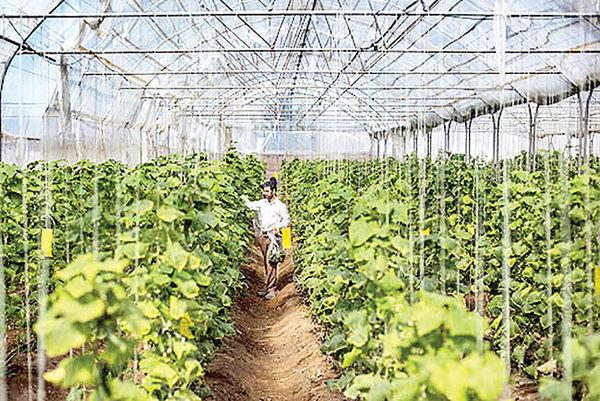 کارنامه یکساله گلخانهها در پایتخت