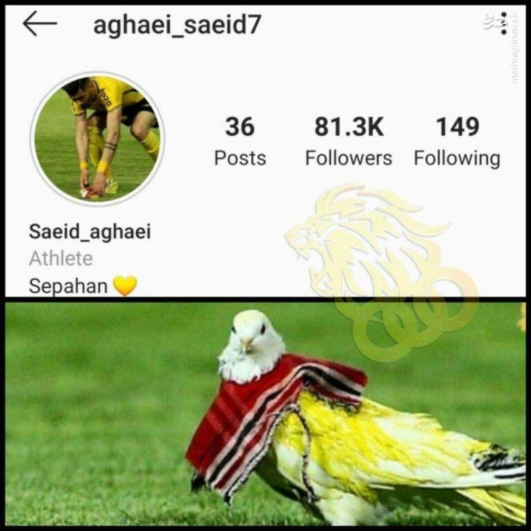 کبوتر علت محرومیت بازیکن سپاهان! +عکس