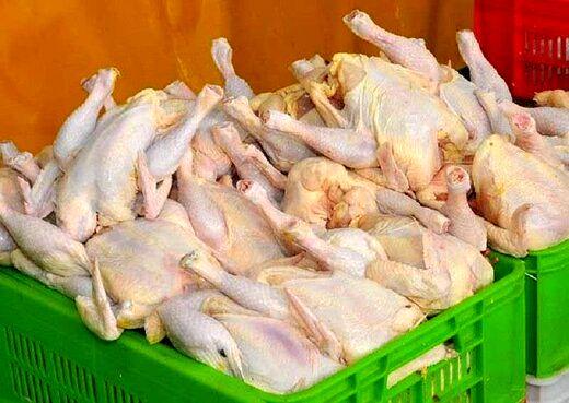 قیمت مرغ دوباره پر کشید