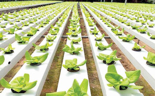 کشاورزی در استان تهران مدرنیزه شد