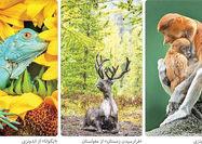 عکس سوسمار درختی برنده رقابت عکاسی جهانی شد