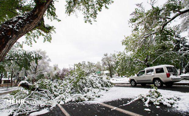 بارش برف بهاری در آمریکا