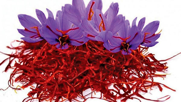 تاثیر منفی گسترش کرونا بر صادرات زعفران