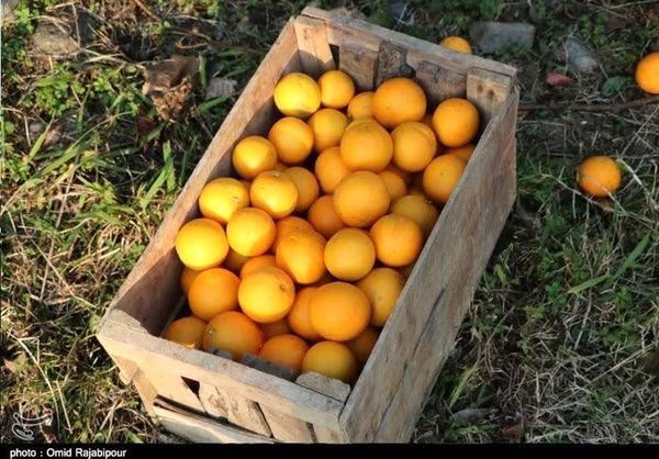 اعلام قیمت میوه شب عید