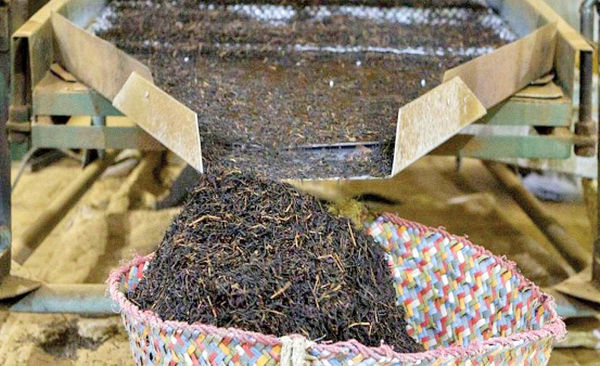احتمال افزایش قیمت چای