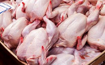 قیمت مرغ در بازار پایین آمد