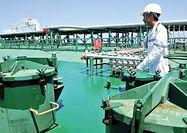 دردسرسندسازی شرکت نفتی سنگاپوری