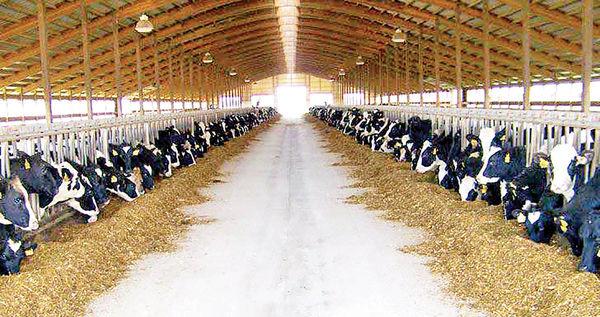 عقبنشینی دولت از بازار شیرخام