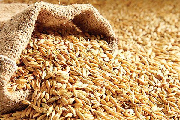 تولید نوعی پروتئین فوق شیرین طبیعی در جو