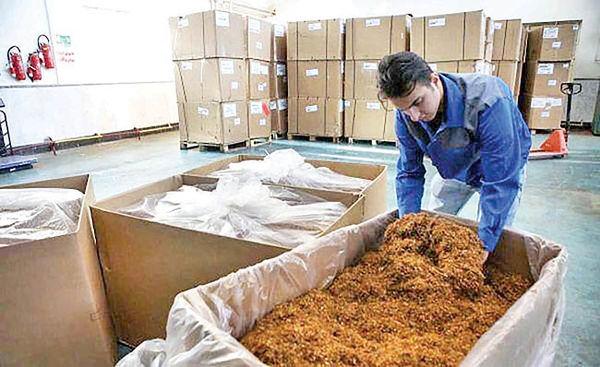 تولید سیگارت سایز کوچک در خمینیشهر