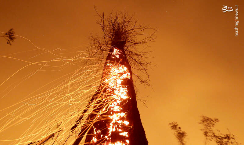 نمایی متفاوت از آتش گرفتن یک درخت در آمازون