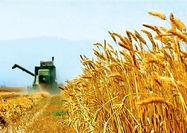قیمت تضمینی گندم مورد قبول کشاورزان نیست
