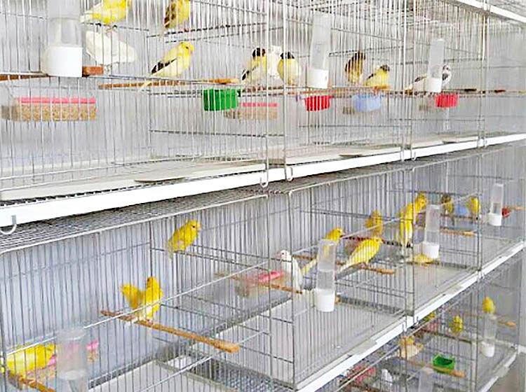 نبض قیمت در بازار پرندهها