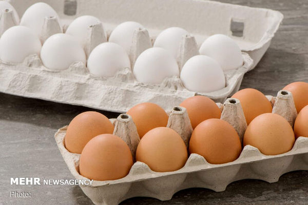 صادرات تخم مرغ متوقف است