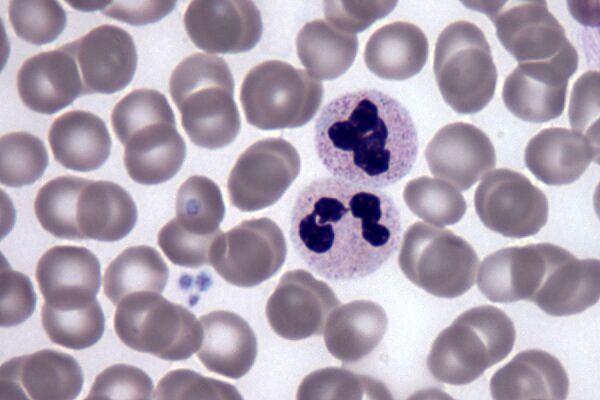 کشف یک پروتئین برای جوان و سالم نگه داشتن خون