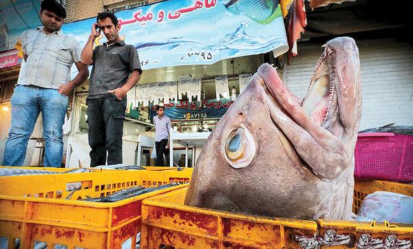 کاهش 40 درصدی فروش ماهی