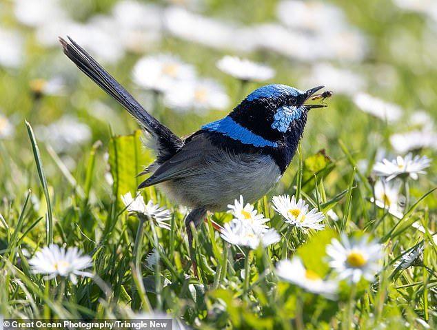 عکسهایی شگفت انگیز از پرندهای که در استرالیا عینک آفتابی میزند!