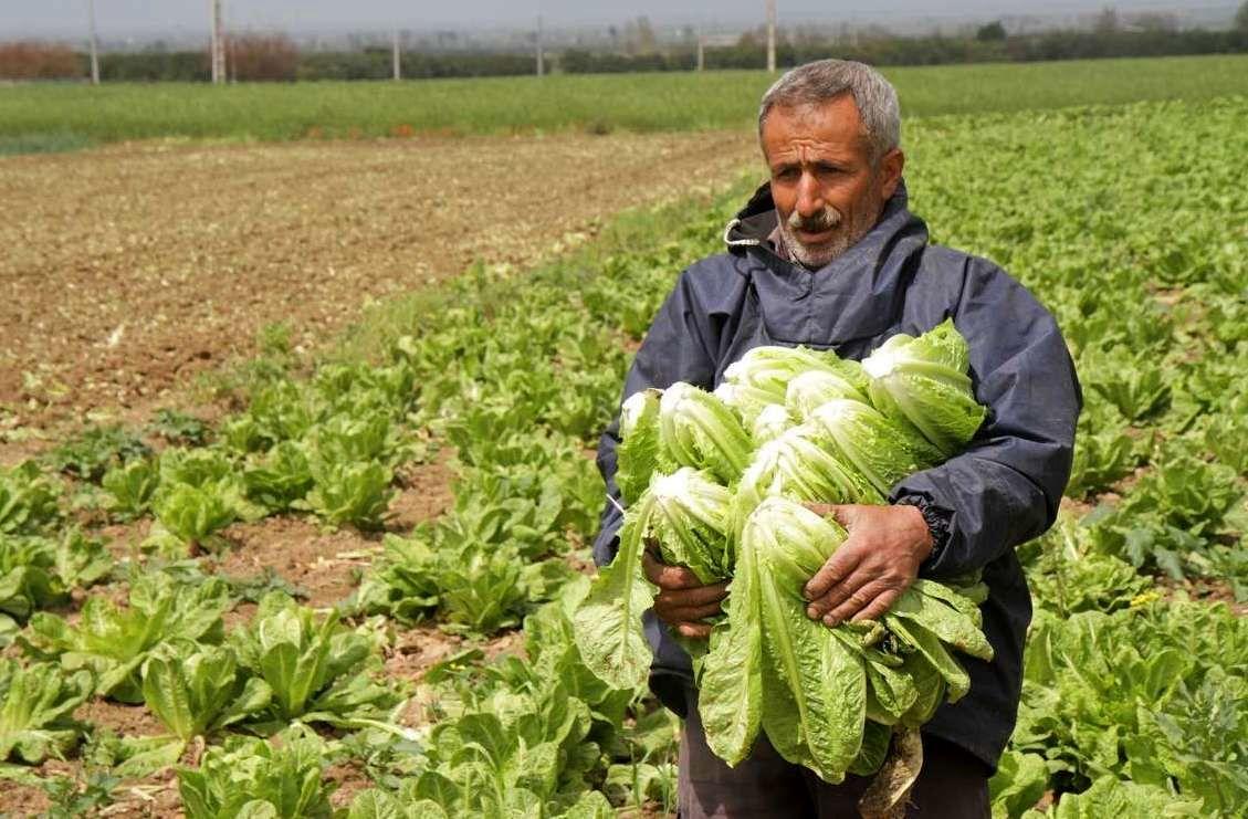 سالاد فصل فراعنه در مازندران