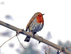پاییز؛ بهار دوستداران پرندهنگری