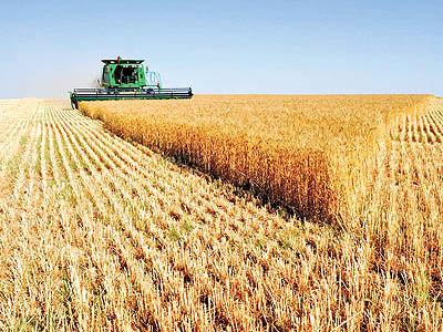 نرخهای تضمینی کشاورزی؛ مصوبهای که هنوز ابلاغ نشده است
