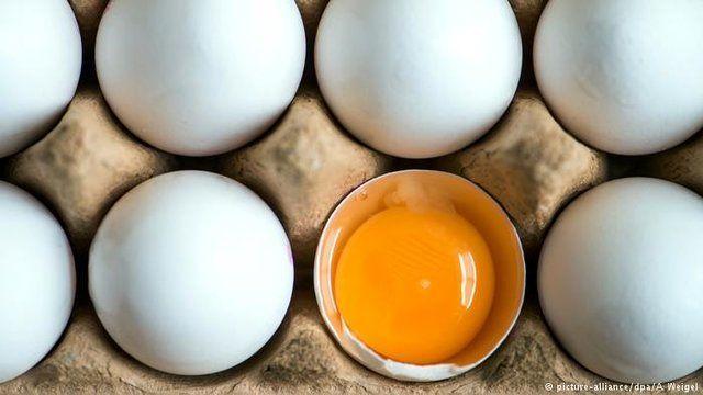 قیمت هر کیلو تخم مرغ برای مصرف کننده ۱۶ هزار و ۹۰۰ تومان