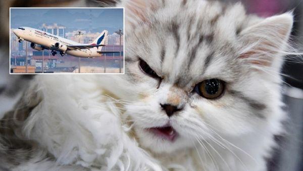 گربه عصبانی باعث فرود اضطراری هواپیما شد