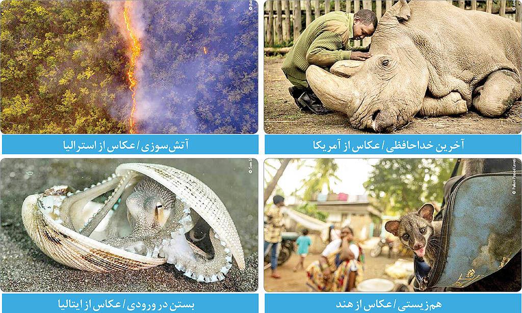 برترین عکسهای حیاتوحش به انتخاب مردم