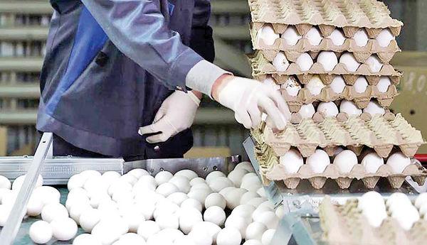 پخش تخممرغ زیر قیمت مصوب