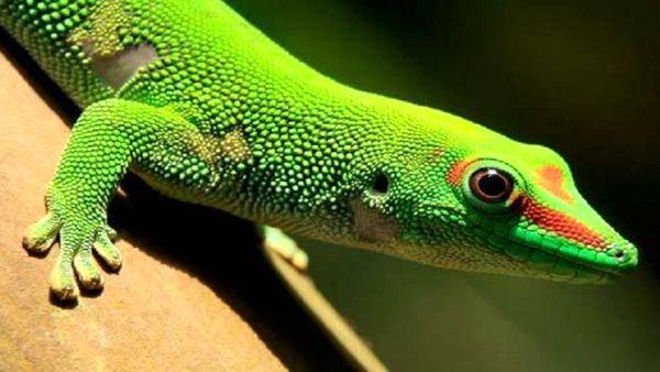 خون کدام حیوانات آبی و کدام سبز است؟ + عکس