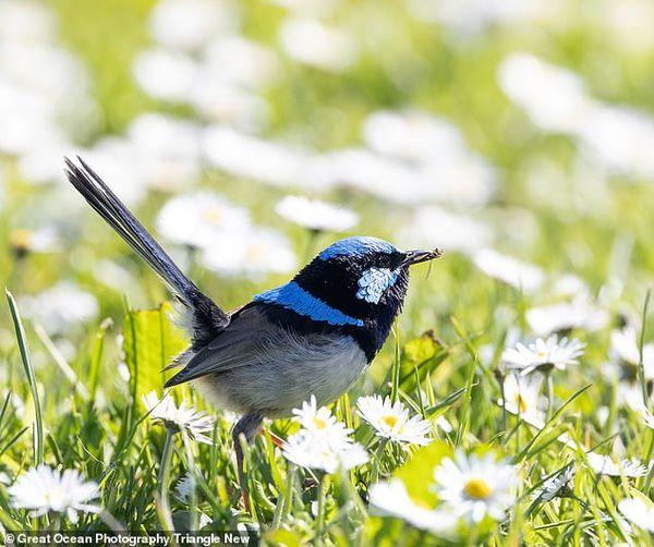 این پرنده عینک آفتابی میزند + عکس