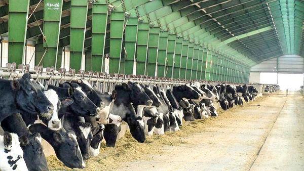 20 هزار تن شیر خشک صادر میشود