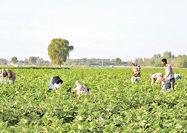 هشدار آبی به کشاورزان جنوبی