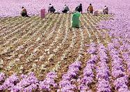 رشد کشاورزی با حضور شرکتها