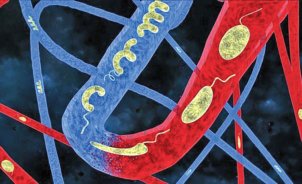 میکروروباتهایی که با تغییر شکل از رگها عبور میکنند