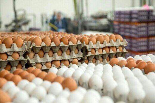 قیمت هر کیلوگرم تخم مرغ درب مرغداری