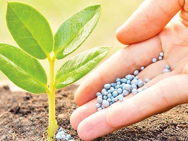 کشاورزان توان خرید کود شیمیایی ندارند