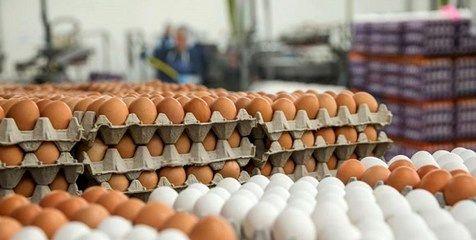 آخرین قیمت تخممرغ در بازار