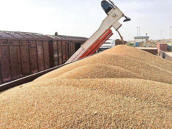 امسال نیاز به واردات گندم نیست
