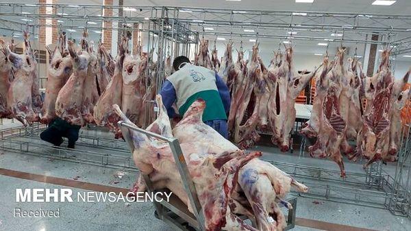 اعلام قیمت گوسفند زنده برای محرم