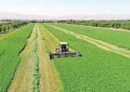 همافزایی نهادها برای جهش تولید کشاورزی و دامپروری