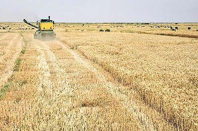 رشد بیرویه قیمت نهادههای کشاورزی
