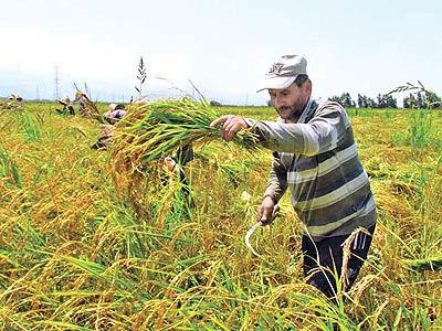 پتانسیلهای راهاندازی بازار مشتقه کشاورزی