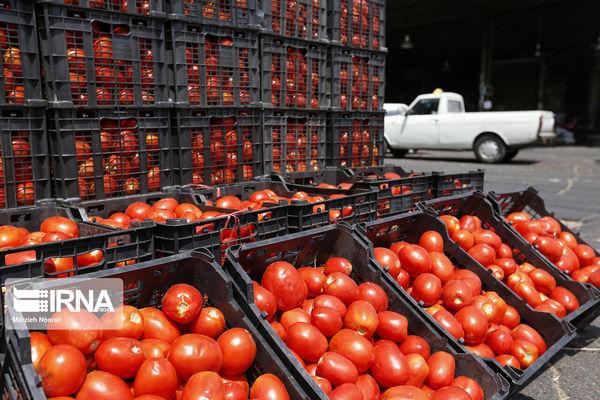 قیمت گوجه فرنگی چقدر شد؟