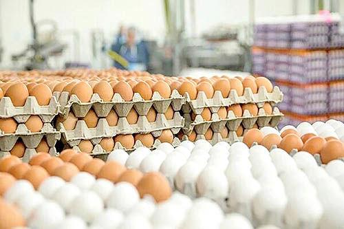 بازار تخممرغ به تعادل رسید
