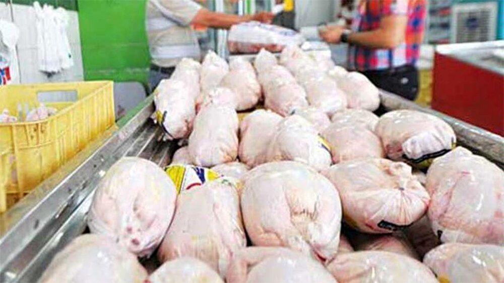 چرا مرغ گران شد