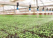 بهرهبرداری از 43 پروژه کلان کشاورزی